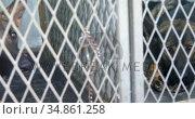 Shepherd dog sitting in the cage 4k. Стоковое видео, агентство Wavebreak Media / Фотобанк Лори