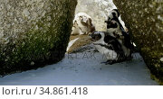 Young penguin birds in the beach 4k. Стоковое видео, агентство Wavebreak Media / Фотобанк Лори