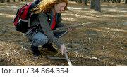 Woman collecting wooden sticks in the forest 4k. Стоковое видео, агентство Wavebreak Media / Фотобанк Лори