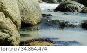 Penguin bird in the sea 4k. Стоковое видео, агентство Wavebreak Media / Фотобанк Лори