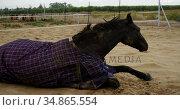 Horse lying on ranch and getting up 4k. Стоковое видео, агентство Wavebreak Media / Фотобанк Лори