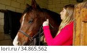Woman wearing rein to horse in stable 4k. Стоковое видео, агентство Wavebreak Media / Фотобанк Лори