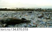 A dead bird in the beach 4k. Стоковое видео, агентство Wavebreak Media / Фотобанк Лори