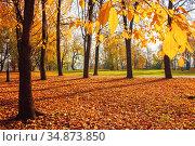 Осенний пейзаж. Осенний парк солнечным утром. Autumn landscape. Autumn city park, yellow fallen leaves on the foreground. Diffusion filter applied. Autumn park. Стоковое фото, фотограф Зезелина Марина / Фотобанк Лори