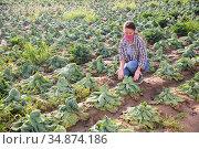 Female farmer in protective mask examining cabbage after drought. Стоковое фото, фотограф Яков Филимонов / Фотобанк Лори