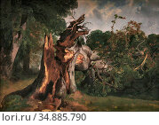 Calame Alexandre - Arbre Brisé Au Kerket Près De Meyringen Oberland... Редакционное фото, фотограф Artepics / age Fotostock / Фотобанк Лори