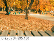An empty wooden bench in a park without people in October September among yellow orange fallen autumn foliage under a tree on an alley in city Saratov during the leaf fall season on a sunny warm day. Стоковое фото, фотограф Светлана Евграфова / Фотобанк Лори