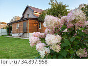 Country house with backyard, beautiful flowers are on foreground and empty green lawn is in front of cottage, nobody. Стоковое фото, фотограф Кекяляйнен Андрей / Фотобанк Лори
