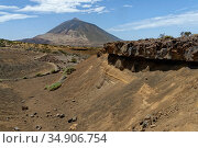 View towards El Teide volcano, Europe's highest mountain, along an eroded gulley though a landscape of lava, volcanic ash and scrubby bushes, Tenerife, Canary Islands, August. Стоковое фото, фотограф Nick Upton / Nature Picture Library / Фотобанк Лори