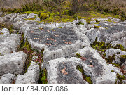 Limestone pavement of Fierloz, Ain, Alps, France, January 2020. Стоковое фото, фотограф Remi Masson / Nature Picture Library / Фотобанк Лори