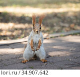 little squirrel in the park. Стоковое фото, фотограф Типляшина Евгения / Фотобанк Лори