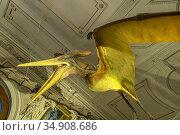 Pteranodon Modell, Flugsaurier, Naturhistorischen Museum Wien, Österreich... Стоковое фото, фотограф Peter Schickert / age Fotostock / Фотобанк Лори