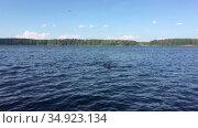 Девочка плавает в лесном озере. Стоковое видео, видеограф Кекяляйнен Андрей / Фотобанк Лори