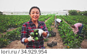 Successful colombian female farmer engaged in organic vegetables growing, showing harvest zucchini on farm field. Стоковое видео, видеограф Яков Филимонов / Фотобанк Лори
