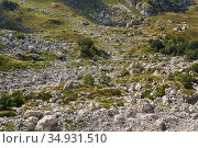 View of a mountain valley with alpine meadows and fields of limestone boulders. Стоковое фото, фотограф Евгений Харитонов / Фотобанк Лори