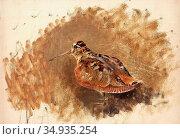 Liljefors Bruno - Eurasian Woodcock (Scolopax Rusticola) - Swedish... Редакционное фото, фотограф Artepics / age Fotostock / Фотобанк Лори