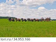 Tradition,carriage,teisendorf. Стоковое фото, фотограф ROHA-Fotothek Frman / easy Fotostock / Фотобанк Лори