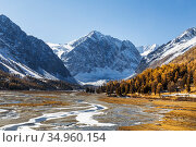 Autumn in the valley of the Akturu river at the foot of the glaciers of the North Chui range. Kosh-Agachsky district, Altai Republic, Russia. Стоковое фото, фотограф Наталья Волкова / Фотобанк Лори