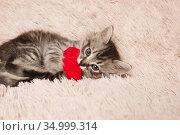 Красивая серая маленькая кошка с красным сердцем в лапах играет. Стоковое фото, фотограф Останина Екатерина / Фотобанк Лори