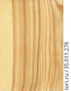 Natural wooden texture background. Ash wood. Стоковое фото, фотограф Дмитрий Кутлаев / Фотобанк Лори