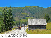 Wooden huts in the Chocholowska Valley. Стоковое фото, фотограф Ignacy Wojciech Pilch / age Fotostock / Фотобанк Лори