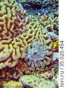 Coral Reef, Brain Coral, Stony coral, Bunaken National Marine Park... Стоковое фото, фотограф Alberto Carrera Anaya / easy Fotostock / Фотобанк Лори