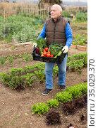 Senior man with harvest of vegetables. Стоковое фото, фотограф Яков Филимонов / Фотобанк Лори