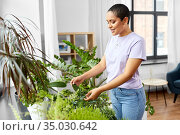 african american woman taking care of houseplants. Стоковое фото, фотограф Syda Productions / Фотобанк Лори