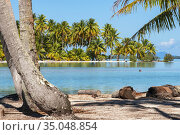 Island of Taha'a, French Polynesia. Motu Mahana palm trees at the... Стоковое фото, фотограф Sergi Reboredo / age Fotostock / Фотобанк Лори