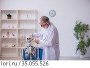 Old male anatomy teacher demonstrating human skeleton. Стоковое фото, фотограф Elnur / Фотобанк Лори