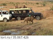 Safari in the Masai Mara national park, Kenya. Kenya, Africa (2010 год). Редакционное фото, фотограф Знаменский Олег / Фотобанк Лори