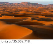 RF - Sand dunes with shadows in evening. Erg Chebbi, Sahara Desert... Стоковое фото, фотограф Pal Hermansen / Nature Picture Library / Фотобанк Лори