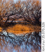 Whitewater Draw with leafless cottonwood trees and cattails lining the marshland, Arizona State Game and Fish preserve, USA. January. Стоковое фото, фотограф Jack Dykinga / Nature Picture Library / Фотобанк Лори