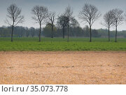 Field treated with glyphosate weedkiller to reset field in preparation for replanting, untreated field with trees in background. Veghel, North Brabant, The Netherlands, March 2019. Стоковое фото, фотограф Edwin Giesbers / Nature Picture Library / Фотобанк Лори