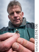 Researcher holding Ground beetle (Carabidae) , caught in weekly trapping. Long-term monitoring. has revealed a 72 percent reduction in Ground beetle numbers... Стоковое фото, фотограф Edwin Giesbers / Nature Picture Library / Фотобанк Лори