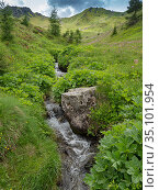 Alpine stream flowing through valley in Dolomites. Ciampac, Fassa Valley, Italy. July 2019. Стоковое фото, фотограф Paul  Harcourt Davies / Nature Picture Library / Фотобанк Лори