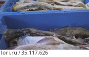 Trade in frozen marine products. Frozen fish in trays. Стоковое видео, видеограф Константин Мерцалов / Фотобанк Лори