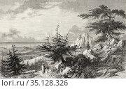 The cedars of Lebanon. Old 19th century engraved illustration Travel... Стоковое фото, фотограф Jerónimo Alba / age Fotostock / Фотобанк Лори