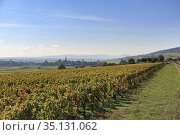 Countryside and vineyards outside of Beaune, Burgundy, France. Стоковое фото, фотограф Jumping Rocks Inc / age Fotostock / Фотобанк Лори