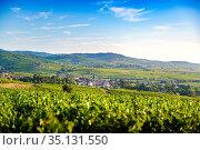 Paysage et vignobles du Beaujolais, Fleurie Chiroubles et Villié-Morgon... Стоковое фото, фотограф Fontaine Gäel / easy Fotostock / Фотобанк Лори