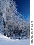 Зимние деревья, покрытые инеем. Winter landscape snowy trees in sunny winter day. Стоковое фото, фотограф Зезелина Марина / Фотобанк Лори