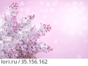 Delicate flowers of lilac on abstract background. Стоковое фото, фотограф Юлия Бабкина / Фотобанк Лори