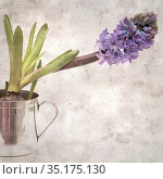 stylish textured square old paper background with Hyacinth flowering spike. Стоковое фото, фотограф Tamara Kulikova / Фотобанк Лори