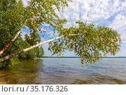 inclined birch trees on a lake above Lake Itkul in the Chelyabinsk region of Russia. Стоковое фото, фотограф Акиньшин Владимир / Фотобанк Лори