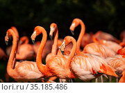 Group of pink flamingos on a green meadow. Стоковое фото, фотограф Restyler Viacheslav / Фотобанк Лори
