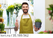 happy male seller with flower showing thumbs up. Стоковое фото, фотограф Syda Productions / Фотобанк Лори