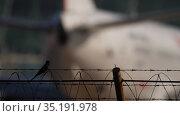 Jet airplane and little bird on fence (2019 год). Редакционное видео, видеограф Игорь Жоров / Фотобанк Лори