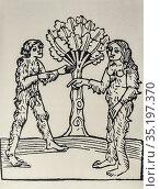 Savage couple. 15th Century engraving. Mandaville, Travels and Wanderings... Стоковое фото, фотограф Juan García Aunión / age Fotostock / Фотобанк Лори