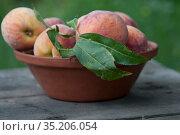 Персики в тарелке на столе. Стоковое фото, фотограф Татьяна Шикова / Фотобанк Лори