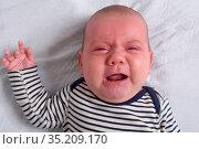 Portrait of a baby reddish skin cry. Стоковое фото, фотограф Josep Curto / easy Fotostock / Фотобанк Лори